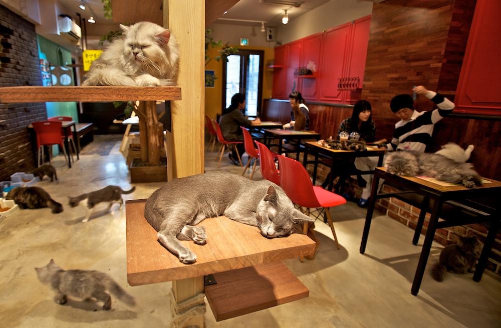 A-Cat-Cafe.jpg