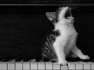 """MUSIC FOR CATS"" O MÚSICA PER A GATS"
