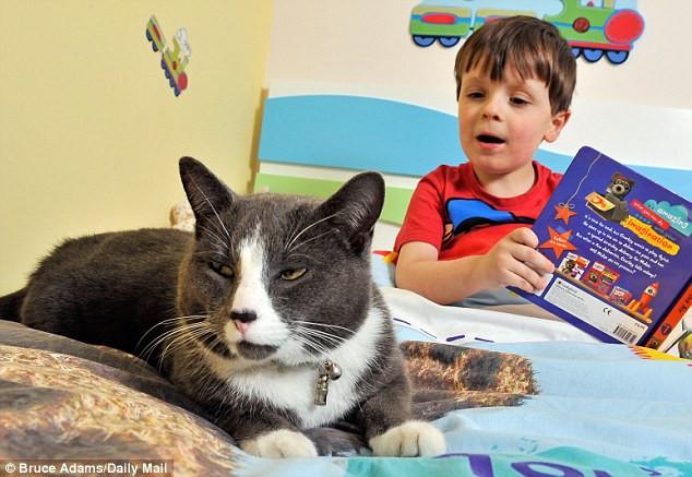 gato-ayuda-autismo.jpg