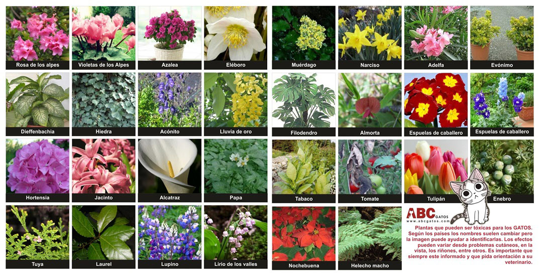 Perill plantes i gats progat la garriga for Les noms des fleurs