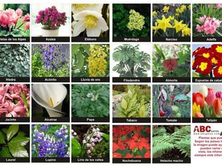 PERILL: PLANTES I GATS
