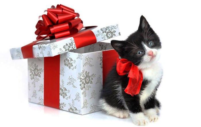 gato-regalo.jpg