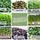 Thumbnail:  Spring CSA Half Share