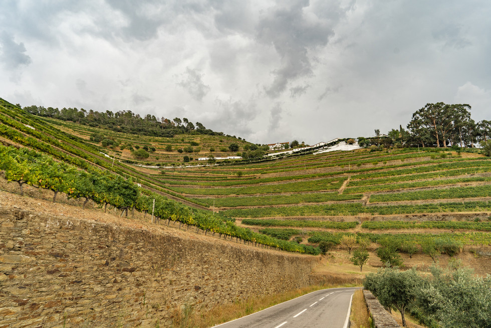 Quinta do Noval, Douro
