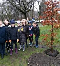 New Trees on Monton Green