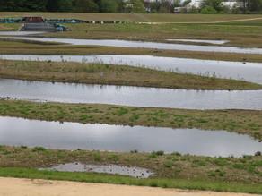 New, 13 Acre Wetlands Open in Salford