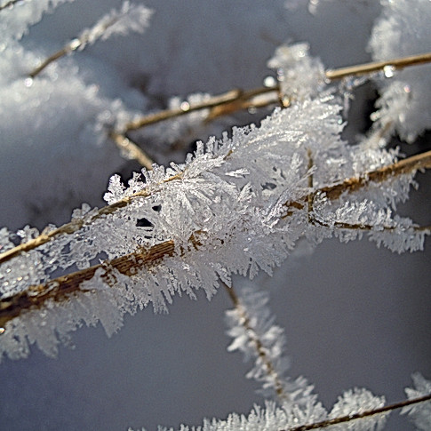 crystals in the snow