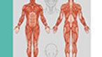 Poster mit Marma-Punkten bei Migräne