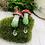 Thumbnail: Magical Mushrooms