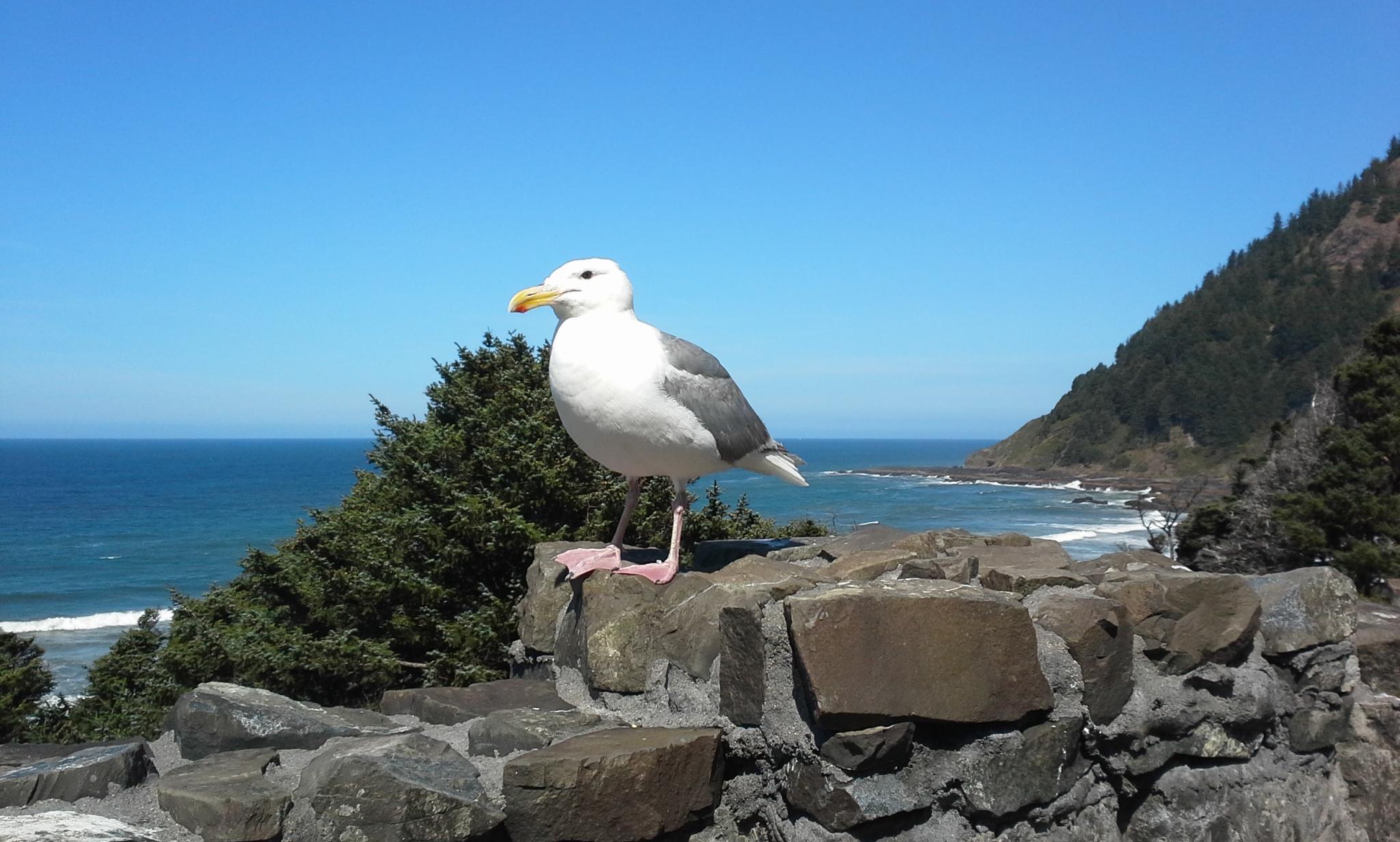 Hey, seagull.  Say cheese!