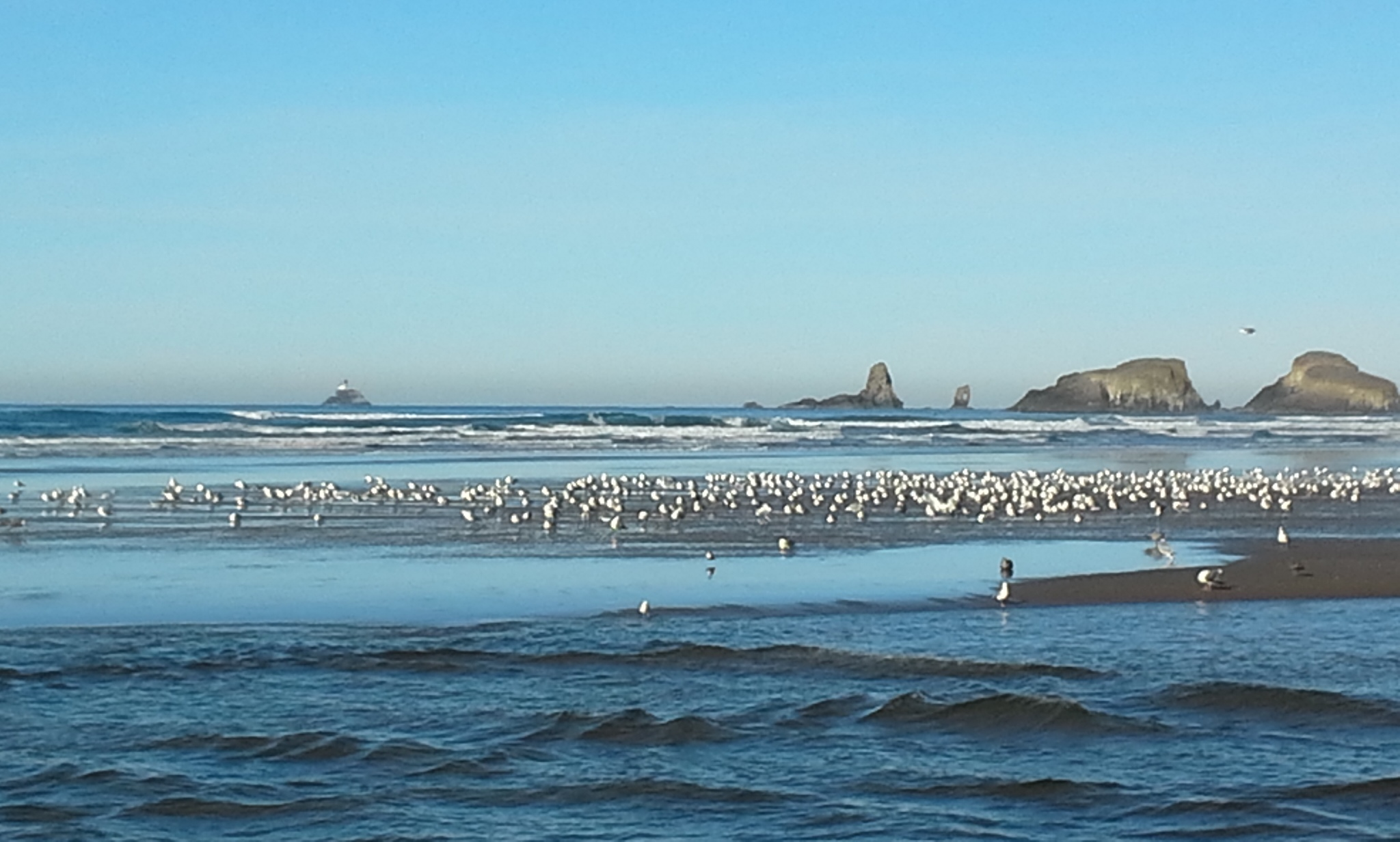 Gulls of a feather flock together