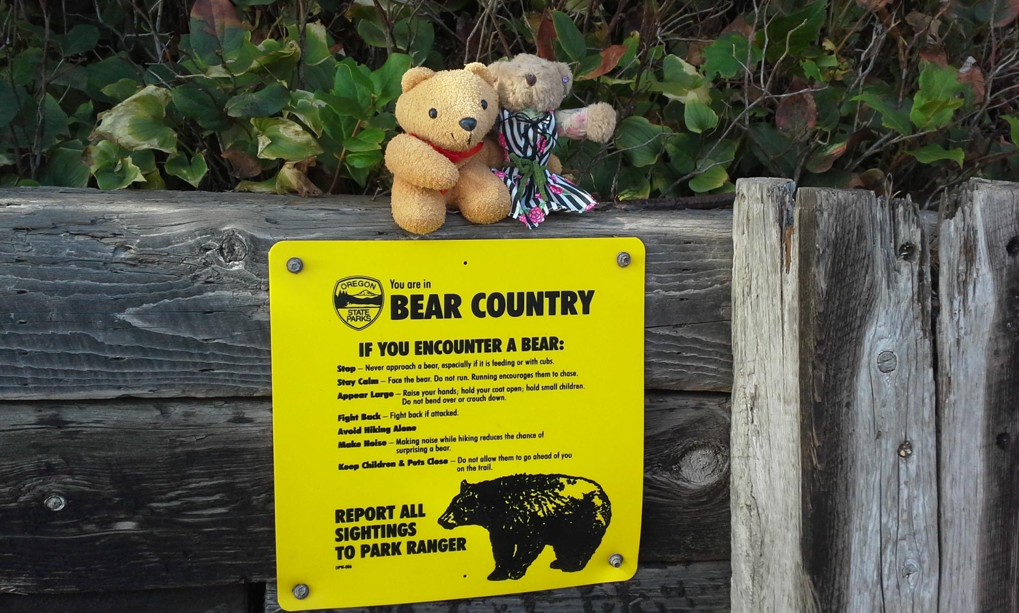 Bears?  EEP!  Where???