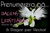 DagensLedstjärna - Prenumerera.png