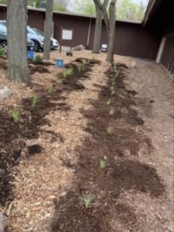 New Plants2