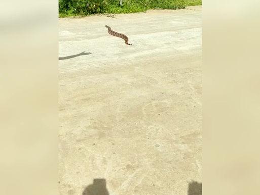 Cobra Gigante é encontrada na zona rural de São Domingos do Cariri, nas margens do rio Paraíba