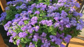 My Deck Flowers