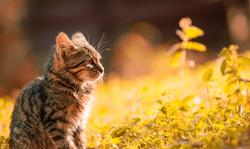 adorable-animal-anxious-669015
