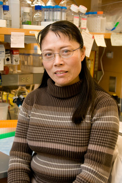 Shengmei Ma