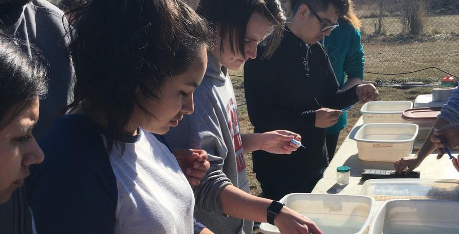 Spring Salmon Tagging