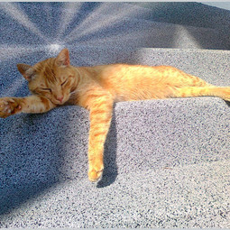 Heiß, heißer, noch heißer! Sammy liebt die Sonne