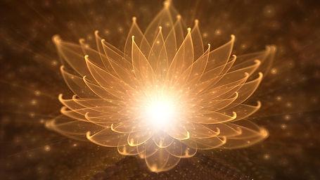lotus de lumière.jpg
