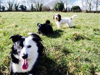 Fin, Rosie & Elsie