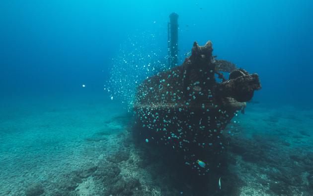 Entouré de poissons papillons de Sainte-Hélène l'épave du Bedgellet repose sur sa quille à 18m de profondeur