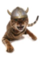 angry bengal viking cat.jpg