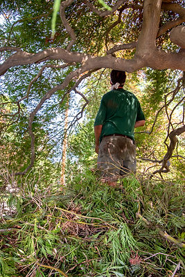 Tree-Service-in-Connecticut_75.jpg