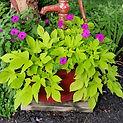 Sweet Caroline Container Garden Designers CT