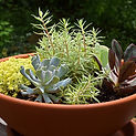 succulent garden Container Garden Designers CT