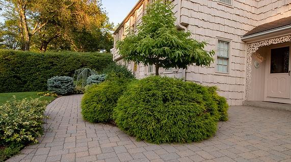 Arborist in Connecticut