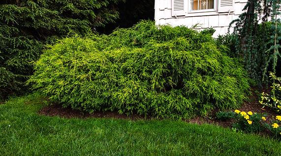 Arborist in Connecticut Tree-Service-in-Connecticut_228.jpg
