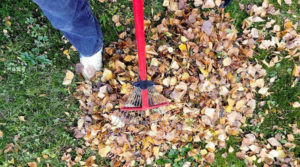 raking-sevices