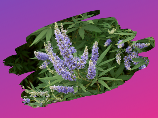 How to use Vitex for hormones