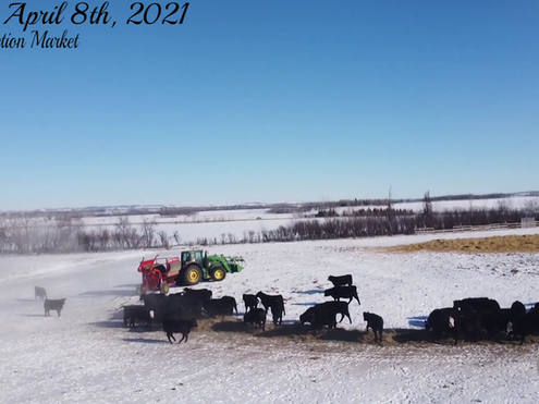 Daines Cattle Promo 2021 (1).mp4