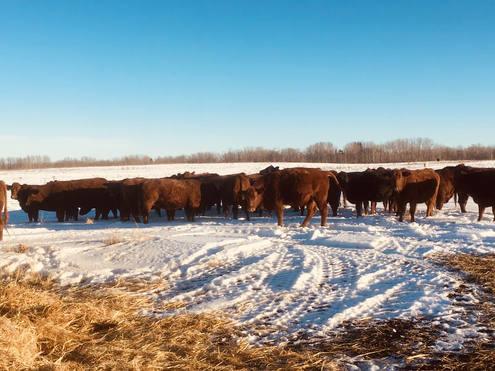 Wayne Marek herd dispersal
