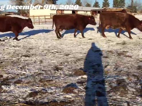 Doug Johnson Herd Dispersal