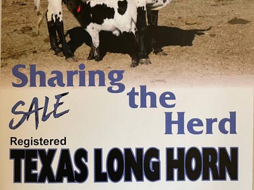 Texas Longhorn Sale