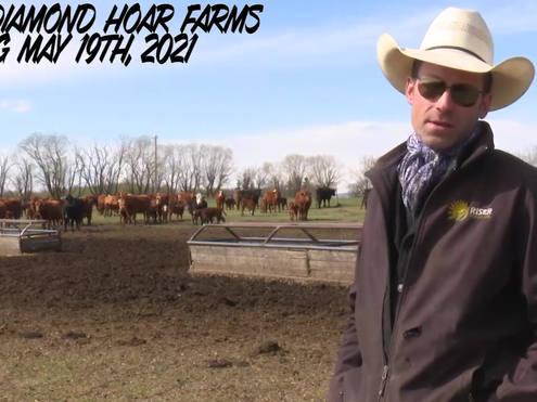 Half Diamond Hoar Farms