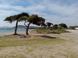 Φυσικό περιβάλλον της περιοχής Σπατών-Αρτέμιδος