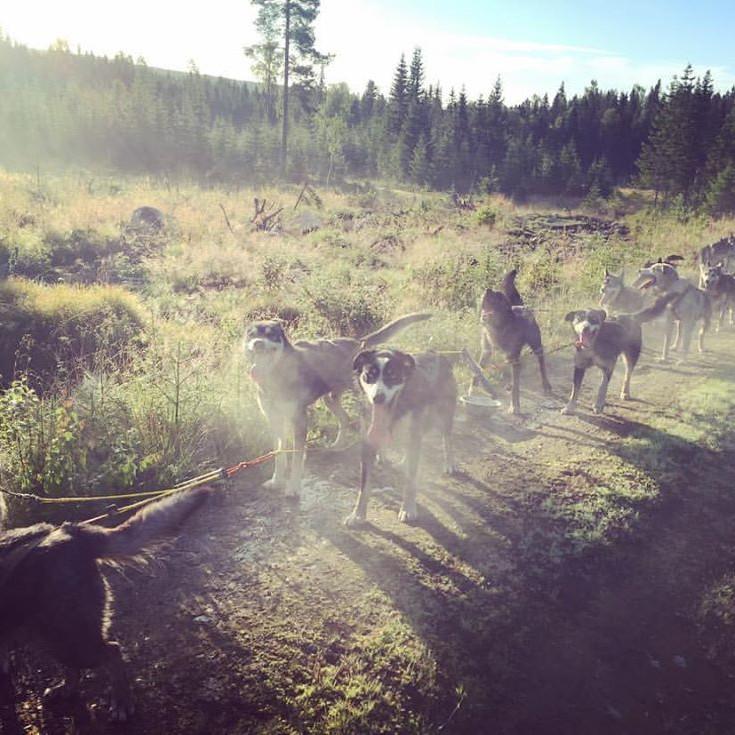"""Camp Julussdalen - """"Dogwalk""""  (5.-10.klasse)"""