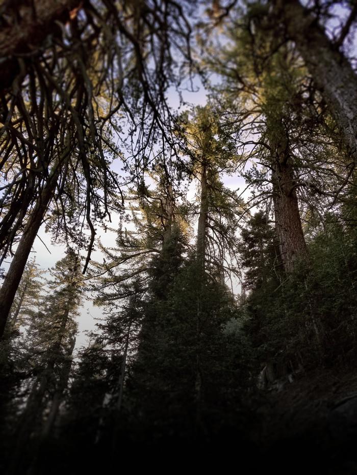 Idyllwild Woods