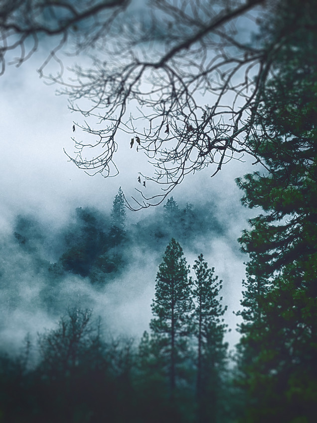 Moody Mist Forrest