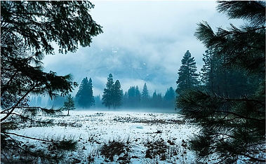 Yosemite Meadows in early spring photography by Art of Elura