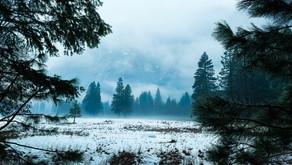 Waking Up Through Nature