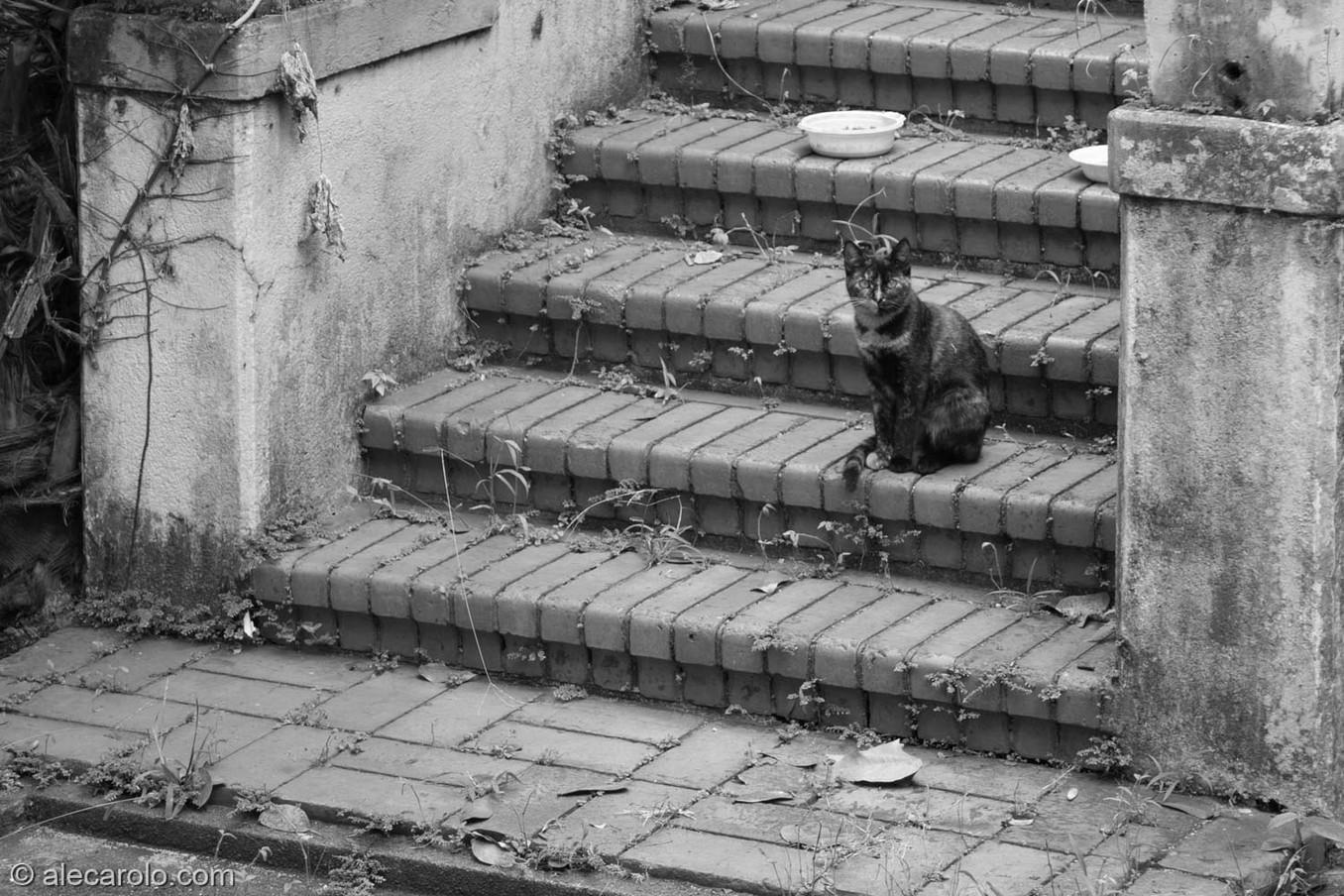 O gato