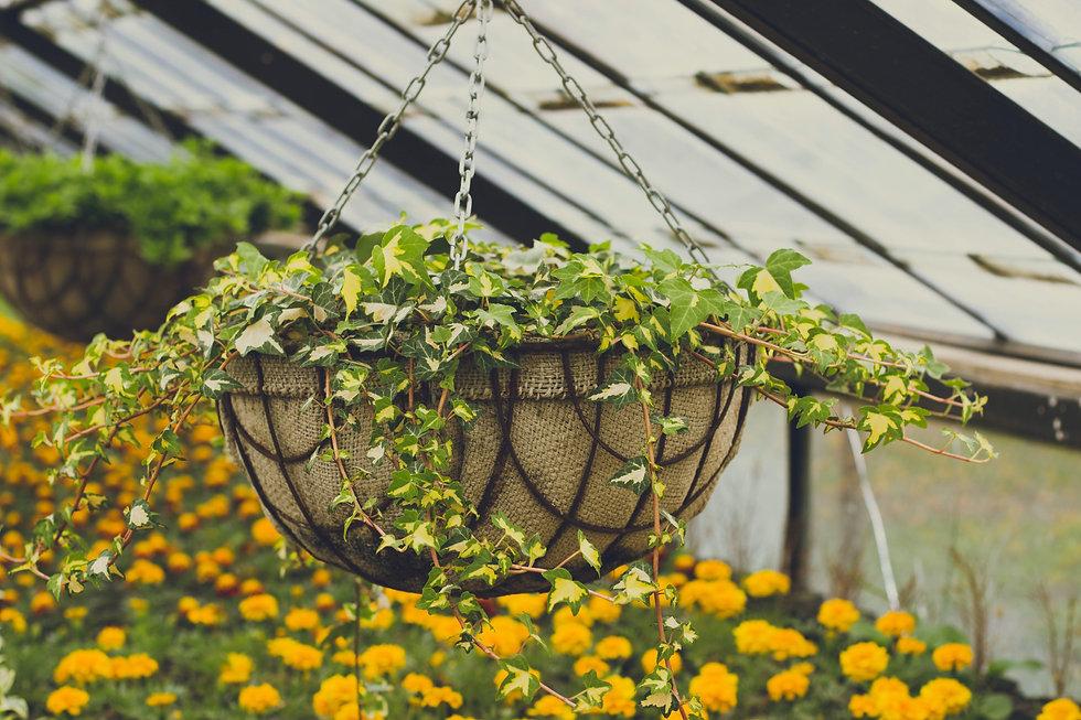 PP-Hanging basket.jpg