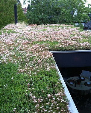 Green Roof website image .jpg
