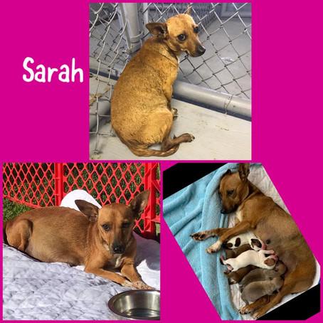 Sarah & Sid